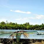 The Shores of Montemayor